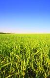 sky för 2 gräs Royaltyfri Fotografi