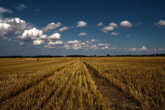sky för hö för bollfält under Arkivbild