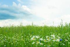 sky för liggande för bakgrundsfältgräs Arkivfoton