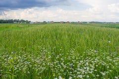 sky för liggande för bakgrundsfältgräs Arkivbilder