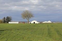 sky för liggande för bakgrundsfältgräs Arkivfoto