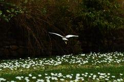sky för silhouette för fågelfågelflyg Arkivfoton