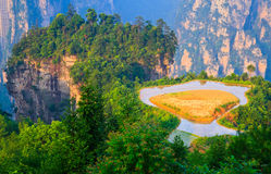 Sky Farmland, Zhangjiajie China Royalty Free Stock Images