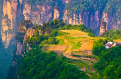 Sky Farmland, Zhangjiajie China Royalty Free Stock Photo