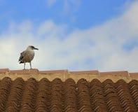 Sky, Fauna, Bird, Seabird royalty free stock images