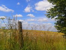 Sky Fence. Wildflower border kent field sunny summer fluffyclouds Stock Image