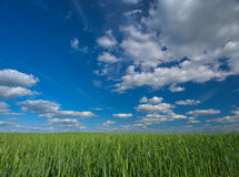 Sky and field Royalty Free Stock Photos