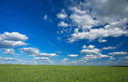Sky and field Royalty Free Stock Photography