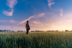 Sky, Field, Crop, Grass Family stock photography