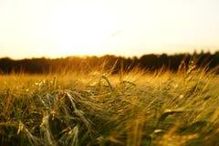 Sky, Field, Grass, Ecosystem Royalty Free Stock Photo