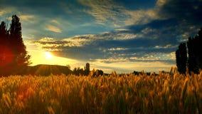 Sky, Field, Grass, Grass Family stock photography