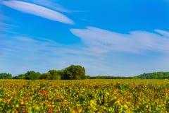Sky, Field, Grassland, Ecosystem royalty free stock photography