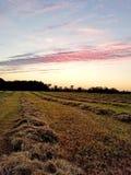 Sky, Field, Grassland, Prairie stock photo