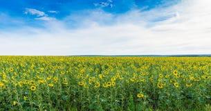 Sky, Field, Yellow, Ecosystem stock image