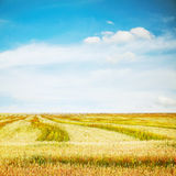 Sky and fields Stock Photos