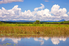 Sky on fields and swamps. 0n summer Royalty Free Stock Photo