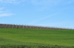 Sky fields and vineyards. Cultivation of vineyards in the province of Trapani - Sicily Stock Photography