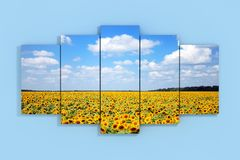 Sky with Fild of Sunflowers Poster on a Blue. 3d Rendering. Sky with Fild of Sunflowers Poster on a Blue Wall background. 3d Rendering Stock Photography