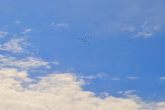 Sky flight  blue geese atmosphere shoal time cloud flying weather outdoor  high sunny clouds spring view nature white fly airplane. Sky flight  blue geese Royalty Free Stock Images