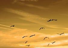 Sky, Flock, Bird Migration, Bird stock image