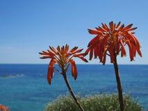 Sky, Flora, Plant, Flower Royalty Free Stock Photo