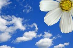 Sky flower Stock Photography