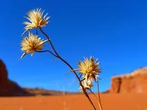 Sky, Flower, Flora, Wildflower Stock Photography