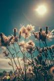Sky, Flower, Plant, Sunlight Stock Images