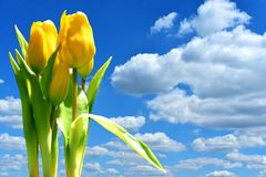 Sky, Flower, Yellow, Field royalty free stock image