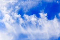 Sky flowers-1 stock photo