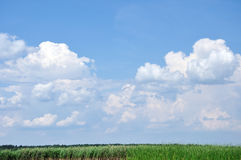 Sky with fluffy clouds above reeds Royalty Free Stock Photography