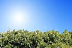 Sky and foliage background. Green foliage under the clear blue sunny sky Stock Images