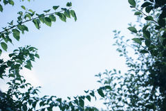 Sky and foliage. Beauty summer day in the forest, abstract natural backgrounds. Free space for text Stock Images