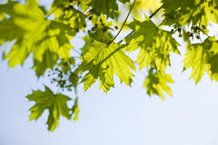 Sky and foliage Stock Image
