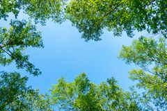 The sky through the foliage, look up. stock photo