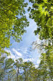 Sky in the forest. A view of the sky in the forest royalty free stock image