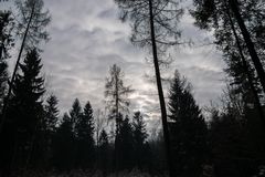 Sky from a forest during a cold winter day stock photo