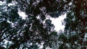 Sky through forest trees. Evening sky looking through tree canopy stock photos