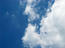 Sky Full of Birds. White clouds on blue sky full of birds royalty free stock images