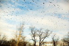 Sky full of birds Stock Image
