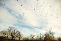 Sky full of birds. In autumn evening stock photography