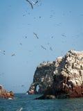 Sky Full Of Birds Ballestas Royalty Free Stock Photos