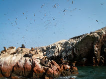 Sky Full Of Birds Royalty Free Stock Image