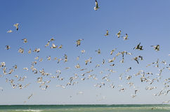 Sky Full of Seagulls Stock Image