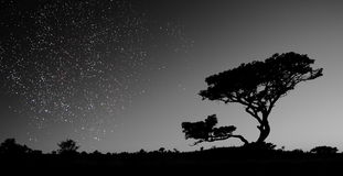 A sky full of stars. Glitters above a silhouetted African landscape royalty free stock photo