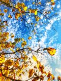 autumn sky royalty free stock images