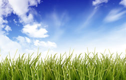 Sky grass Royalty Free Stock Photos