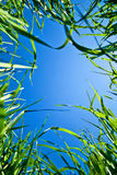 Sky through the grass Stock Photography