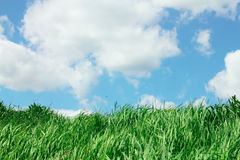 Sky and grass. Green grass under cloudy blue sky Stock Photography