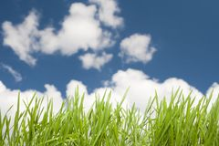 Sky and Grass Royalty Free Stock Images